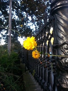 Blooming flower on iron gate